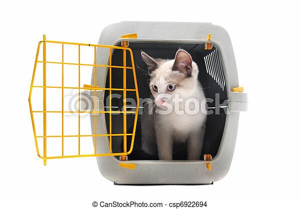 caresser transporteur, chaton - csp6922694