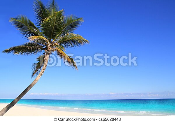Caribbean coconut palm trees in tuquoise sea - csp5628443