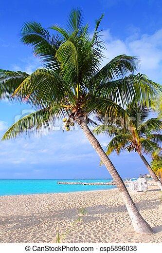 Caribbean North beach palm trees Isla Mujeres Mexico - csp5896038