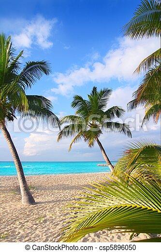 Caribbean North beach palm trees Isla Mujeres Mexico - csp5896050