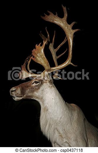 caribou - csp0437118