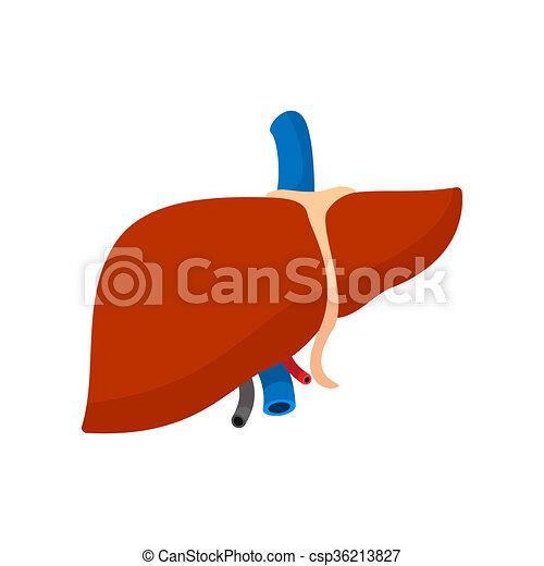 caricatura, hígado, humano, icono. plano de fondo, aislado, clip