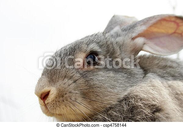 carino, animale - csp4758144