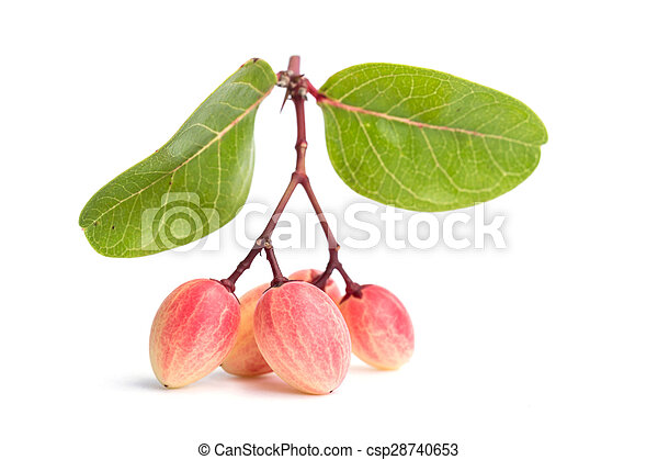 Carissa carandas L. tropical fruit isolated on white background - csp28740653