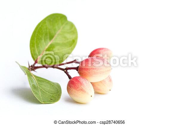 Carissa carandas L. tropical fruit isolated on white background - csp28740656