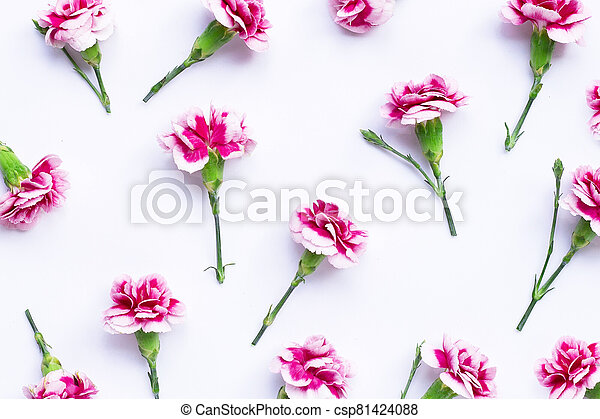 Carnation flower on blue background.  Top view - csp81424088