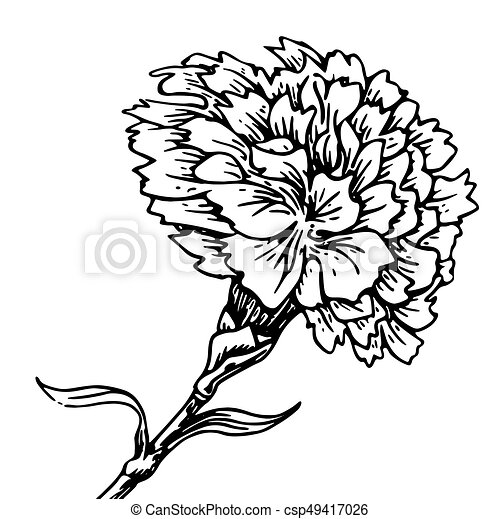 carnation flower sketch of tattoo detailed beautiful vector rh canstockphoto com carnation clipart pink carnation clip art