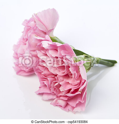 Pink Carnations Flower For Mothers Day On White Background