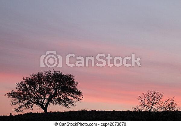 Carob Tree silhouette - csp42073870