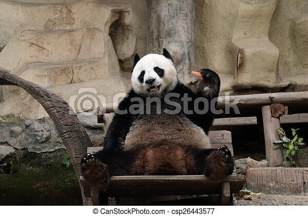 carotte, manger, ours panda - csp26443577