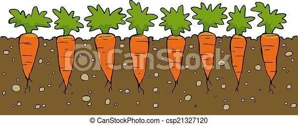 carottes - csp21327120