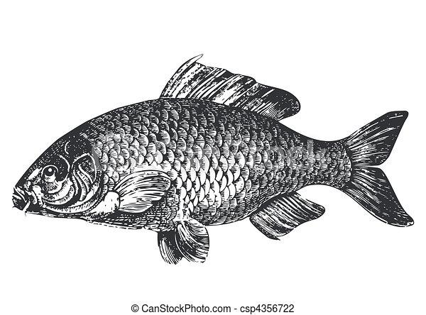 Carp fish antique illustration - csp4356722