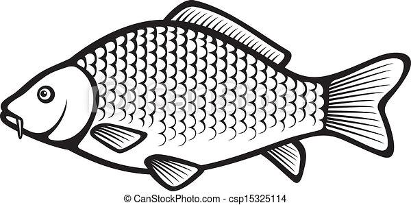 Carp fish (Common carp) - csp15325114