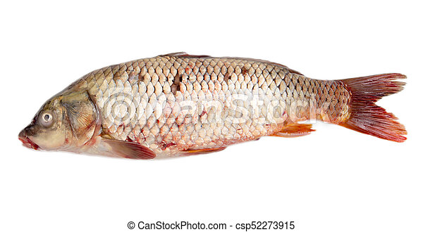 carp on a white background - csp52273915
