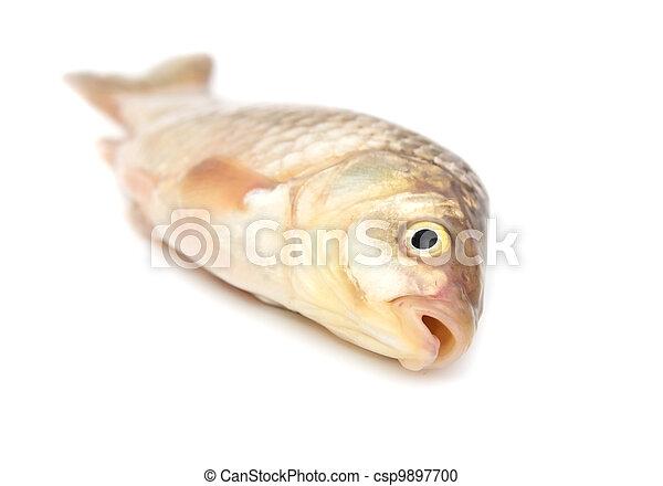 carp on a white background - csp9897700