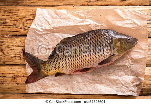 carp on parchment - csp67328604