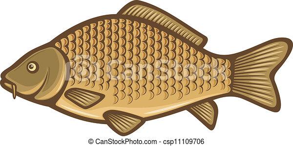 Carpa common fish carp for Carpa giapponese prezzo