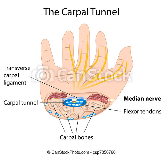 Carpal tunnel syndrome, eps8  - csp7856760