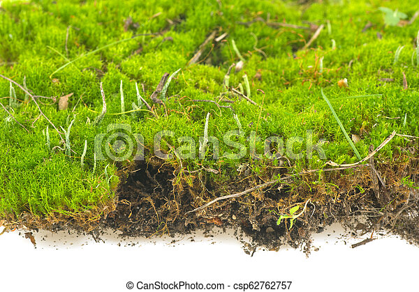 carpet of moss on a white background - csp62762757