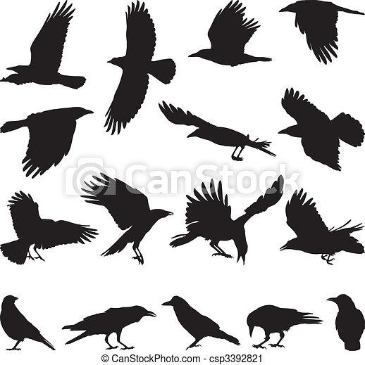 Carrion crow - csp3392821
