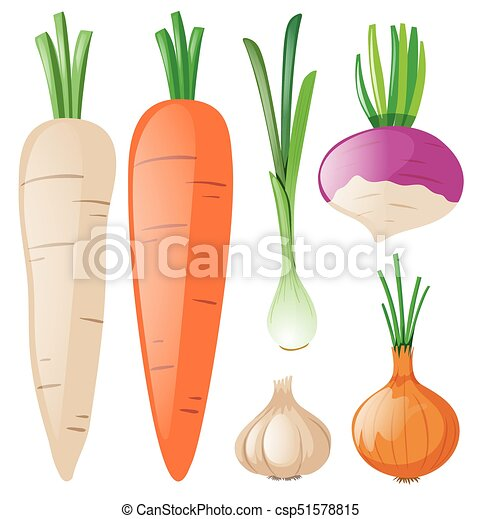 Carrots and other root vegetables illustration.