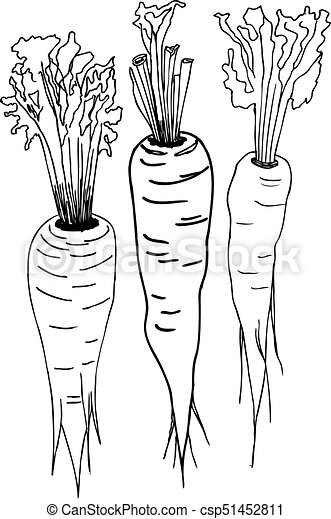 Carrots Vector Illustration Hand Drawing Style Black And White