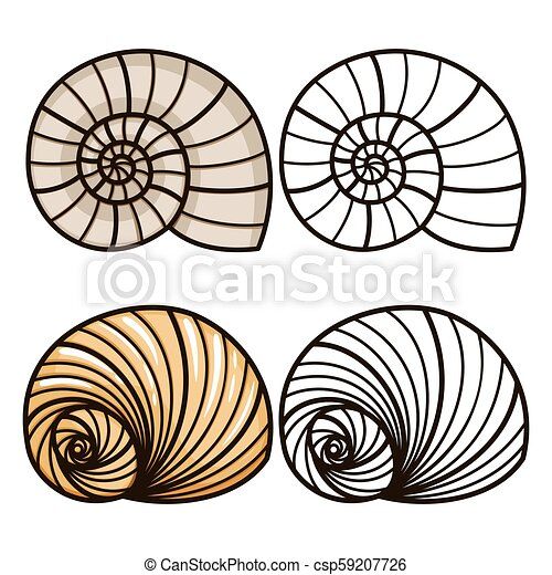 Sea shell coloring page 040 | 470x450