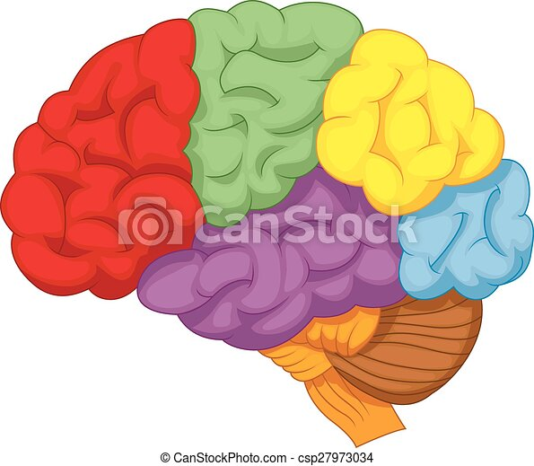 vector illustration of cartoon colorful brain vectors search clip rh canstockphoto com  free brain clipart images