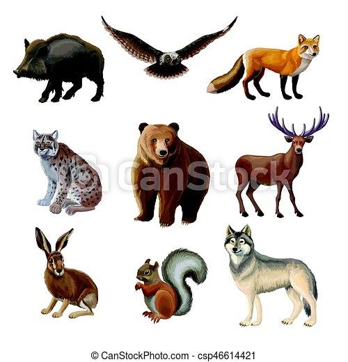 Cartoon Forest Animals Set - csp46614421