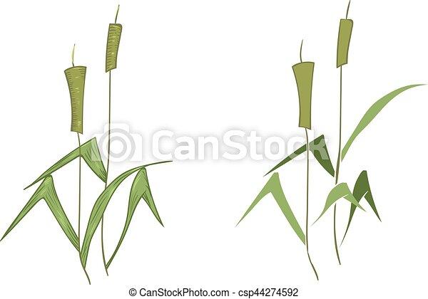 Cartoon Illustration of Reeds - csp44274592
