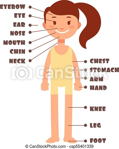 Cartoon Little Girl Vocabulary Of Human Body Parts Vector