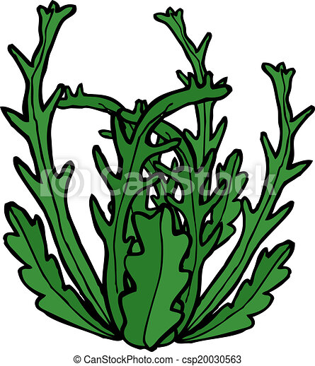 cartoon seaweed clip art vector search drawings and graphics rh canstockphoto com seaweed clipart black and white seaweed clipart free