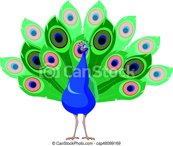vector image of the cartoon smiling peacock https www canstockphoto com cartoon smiling peacock 48099169 html