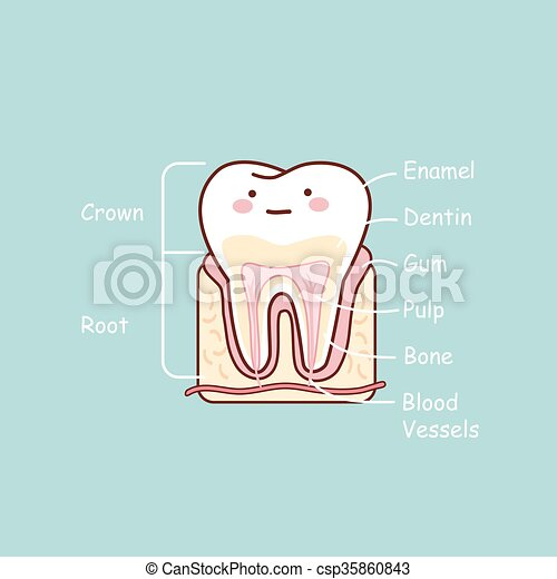 Cartoon tooth anatomy chart, great for dental care and teeth ...