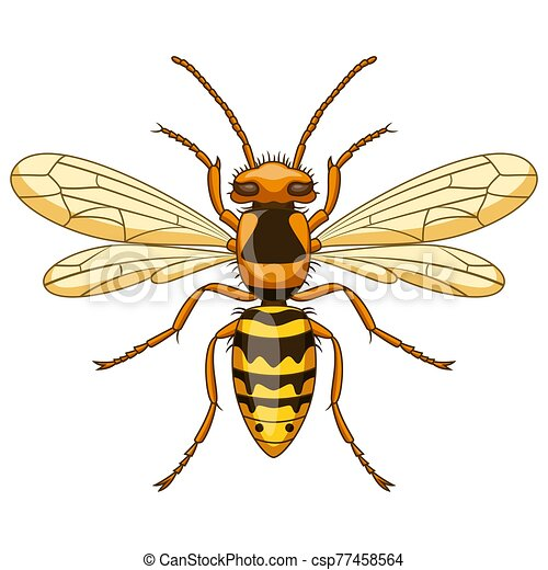 Cartoon wasp insect mascot on white background - csp77458564