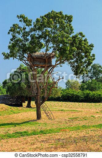 casa, albero - csp32558791
