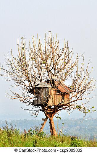 casa, albero - csp9003002