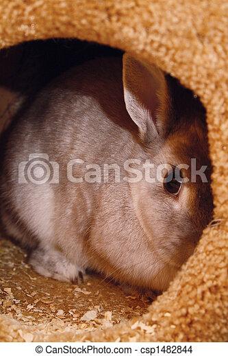 Bunny escondida en casa - csp1482844