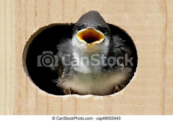 Traga de árbol en una casa de pájaros - csp49055443