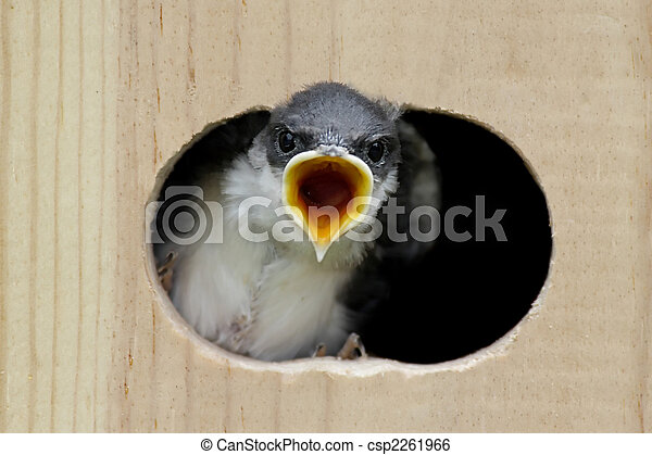 Traga de árbol en una casa de pájaros - csp2261966