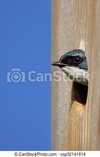 Traga de árbol en una casa para pájaros - csp32141814
