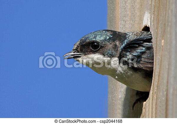 Traga de árbol en una casa de pájaros - csp2044168