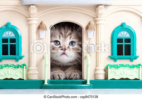casa pequeña, gatito, juguete, sentado - csp9470138