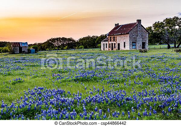 Casa abandonada en Texas Wildflowers. - csp44866442