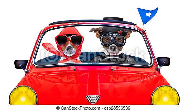 casado, perros, sólo - csp28536539