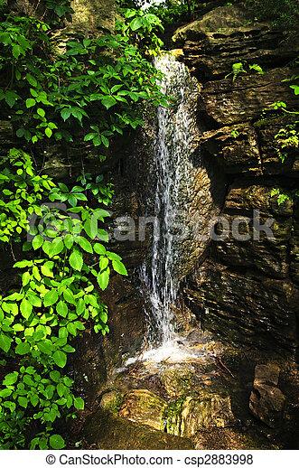 cascada, bosque - csp2883998