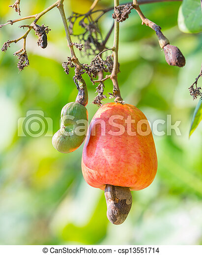 Cashew nut - csp13551714