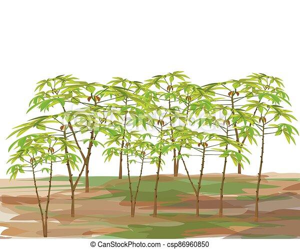 cassava plant on white background vector design - csp86960850