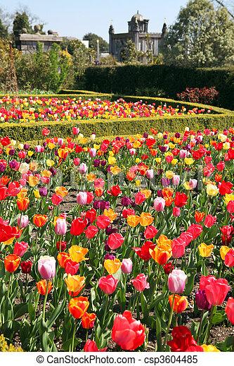castle garden Arundel tulips - csp3604485
