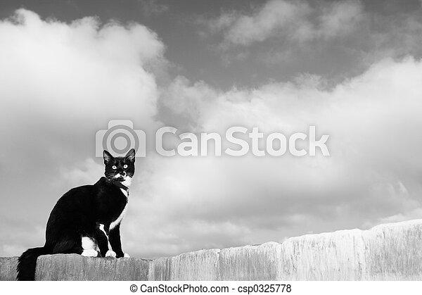 Cat #1 - csp0325778